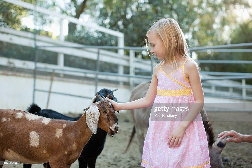 Girl petting goat : Stock Photo