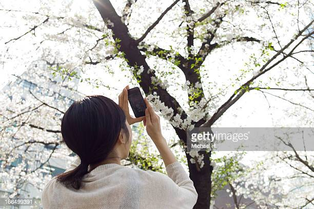 Girl photographing cherry tree  with a smartphone