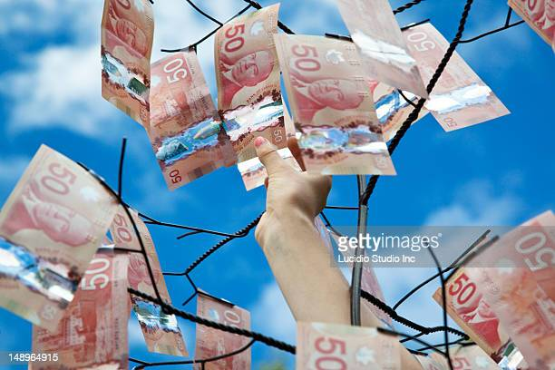 A girl picking 50 Canadian dollar bills off a tree