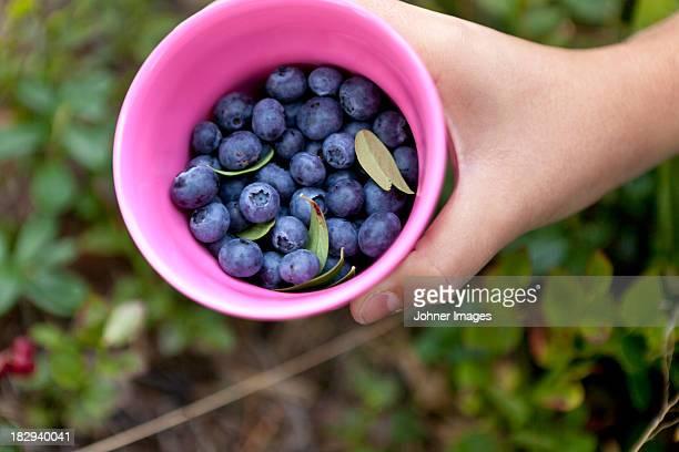 Girl picking blueberries