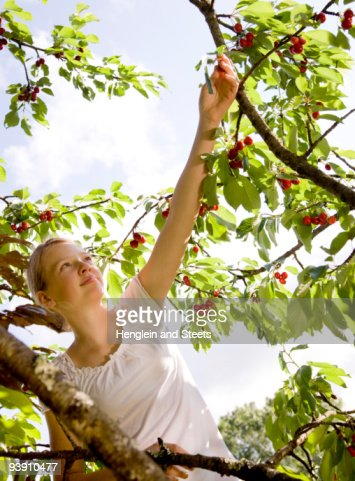 girl picking cherries on tree : Stock Photo