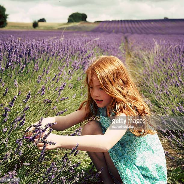 Girl (6-7) picking lavender