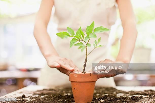 Mädchen Pflanzen Setzling in keramische flower pot