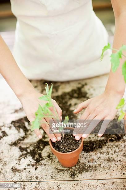 Plantation de semis fille dans un pot de fleur en céramique