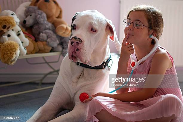 Girl playing 'being a vet' with her huge dog