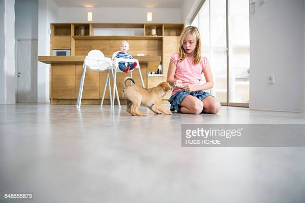 Girl playing with puppy on dining room floor