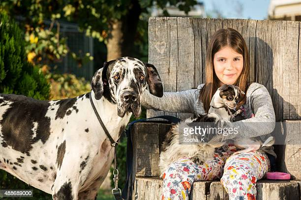 Girl posing with her dogs (Great Dane, Shih Tzu, Chihuahua)