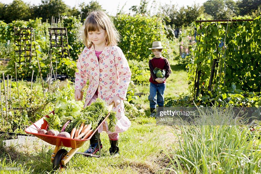 Girl pushing wheelbarrow with vegetables, portrait : Stock Photo