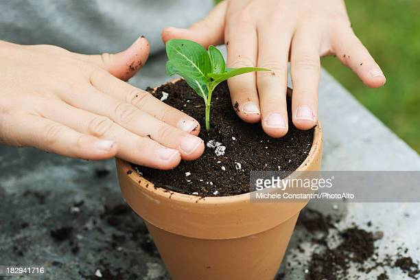 Girl putting plant in pot, cropped