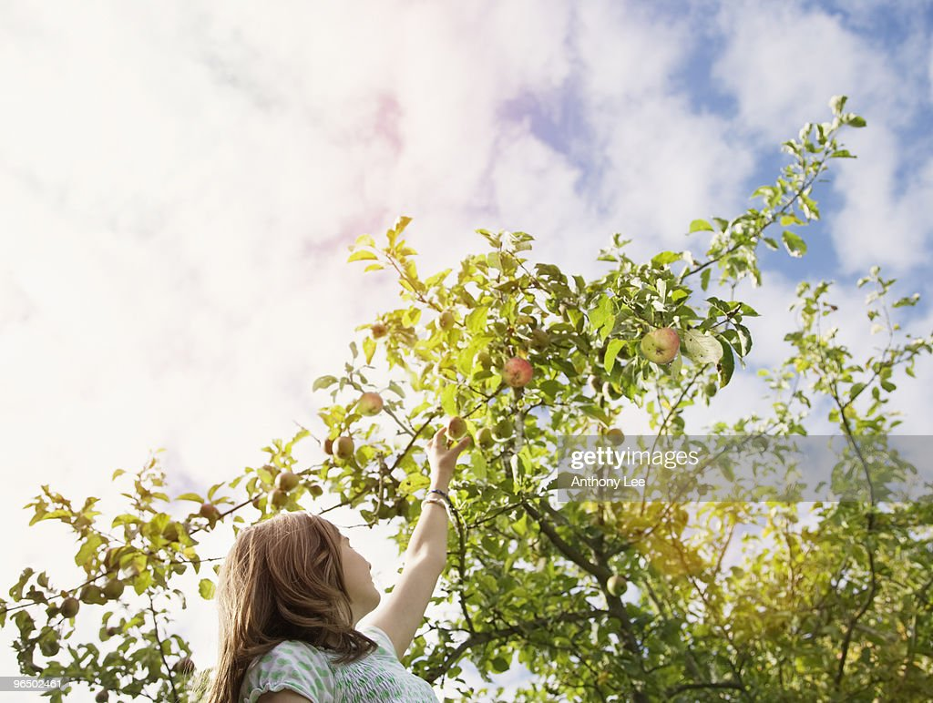 Girl reaching for apple on tree : Stock Photo
