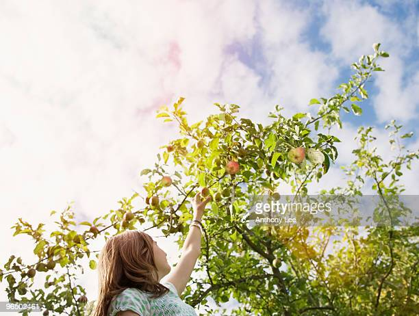 Girl reaching for apple on tree