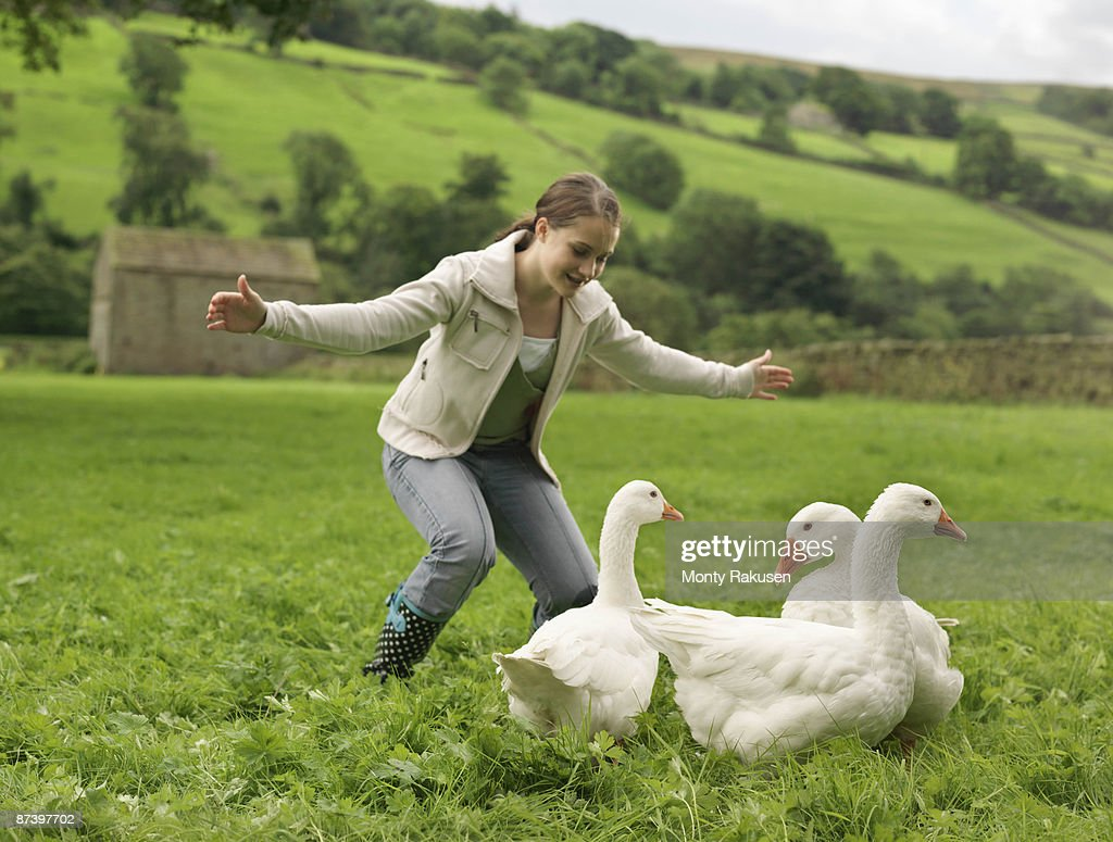 Girl Rounding Up Geese : Stock Photo