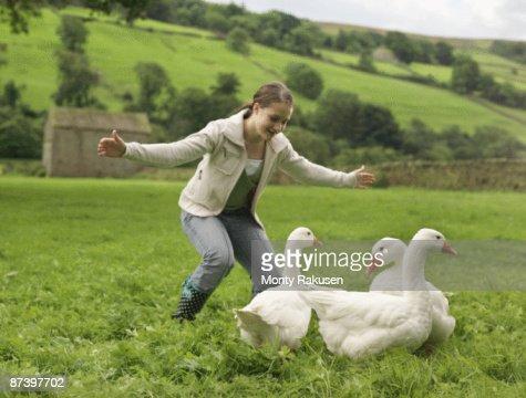 Girl Rounding Up Geese : Stock Photo