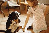 Girl shaking dog's paw