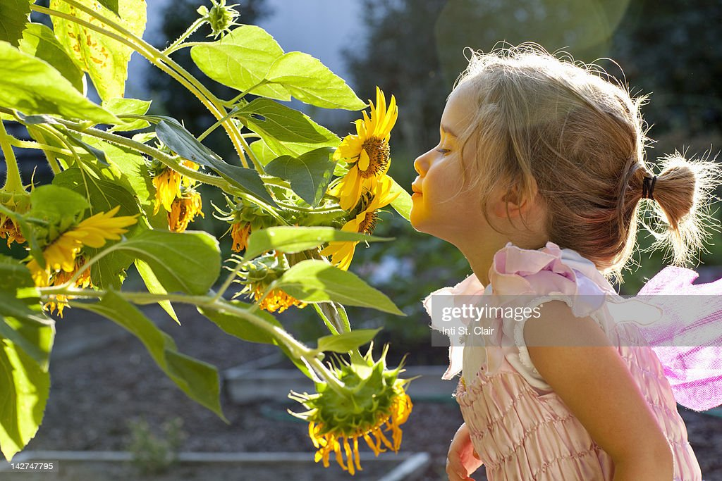 Girl (4-5) smelling flowers in garden : Stock Photo