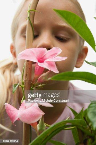 Girl smelling mandevilla flowers : Stock Photo