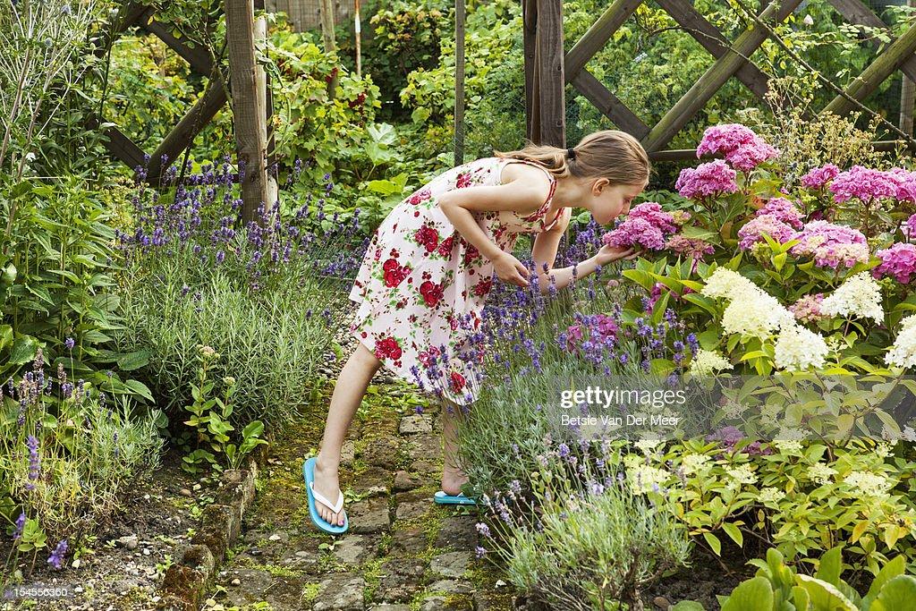 Girl smells hortentia flower in garden : Stock Photo