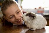 Girl smiling at guinea pig
