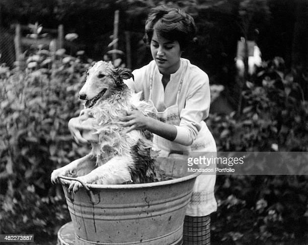 A girl soaping a dog in a tin basin 1960s