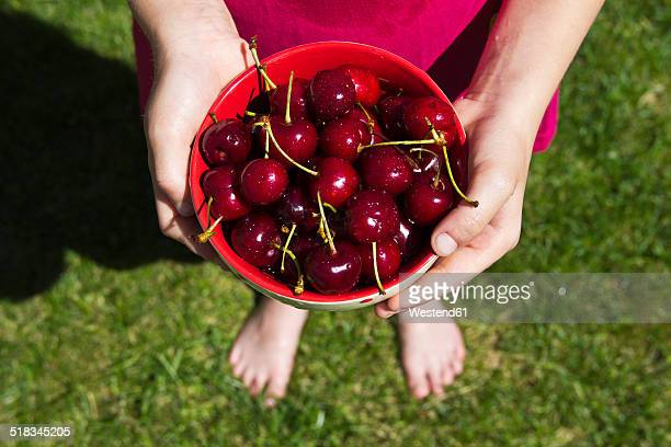 Girl standing on a meadow holding bowl of sweet cherries, partial view