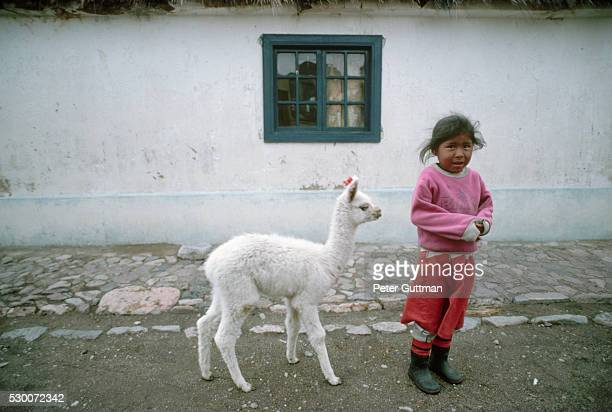 Girl Standing with Llama Calf
