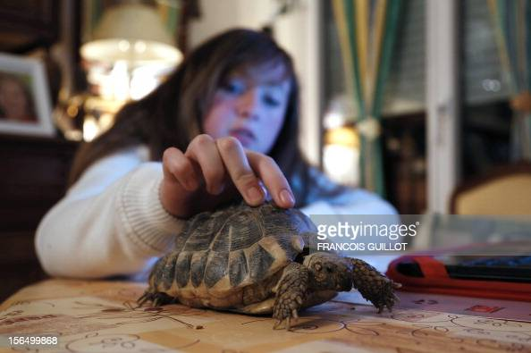 TOUSSAINT A girl strokes her Hermann's tortoise on November 15 2012 in a flat in Paris AFP PHOTO FRANCOIS GUILLOT