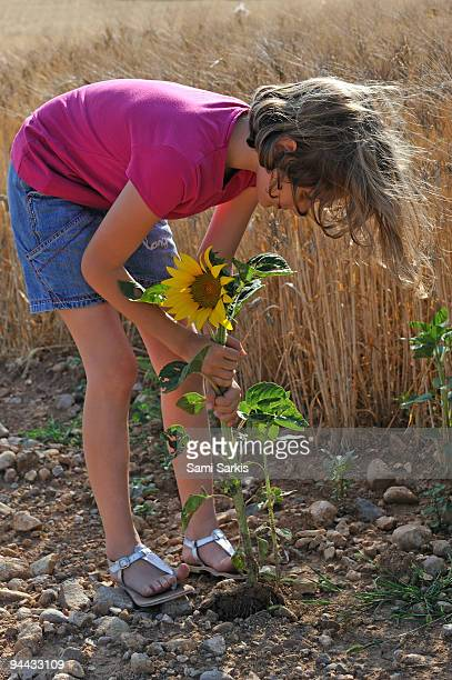 Girl uprooting sunflower from ground in field