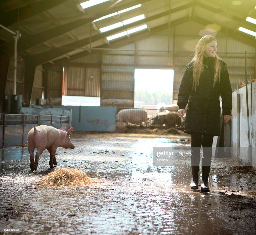 Girl visiting organic pig farm. : Bildbanksbilder
