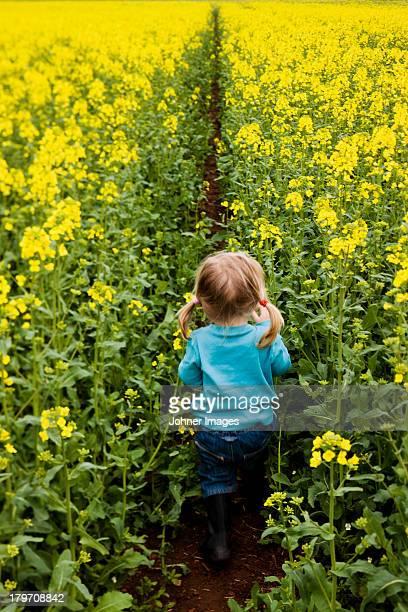 Girl walking through oilseed rape field