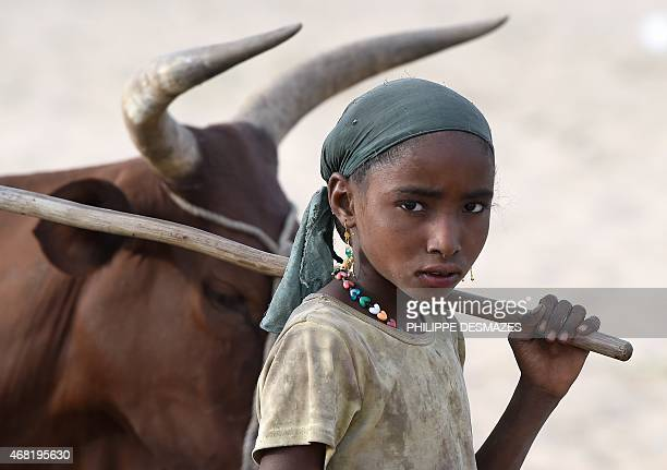 A girl walks next to a herd of cows close to the village of Guite in Chad's lake region north of the capital NDjamena on March 30 2015 AFP...