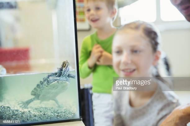 Girl watching turtle swim in glass tank