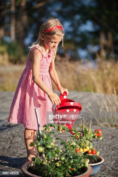 Girl watering potted tomatoes