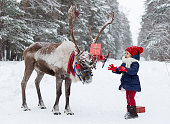 Reindeer in a festive winter forest with a girl, dressed in a red cap