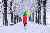 Girl with colourful umbrella walking on the path and row trees. Winter.
