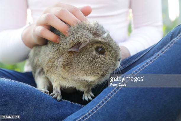 Girl with guinea pig on lap in garden