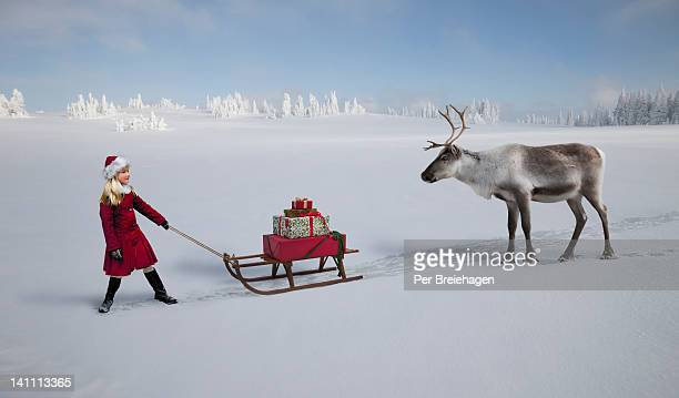 A girl with sled and gifts meets a reindeer