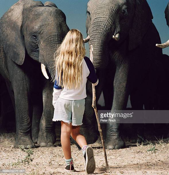 Girl (6-8) with stick in front of African elephants, rear view