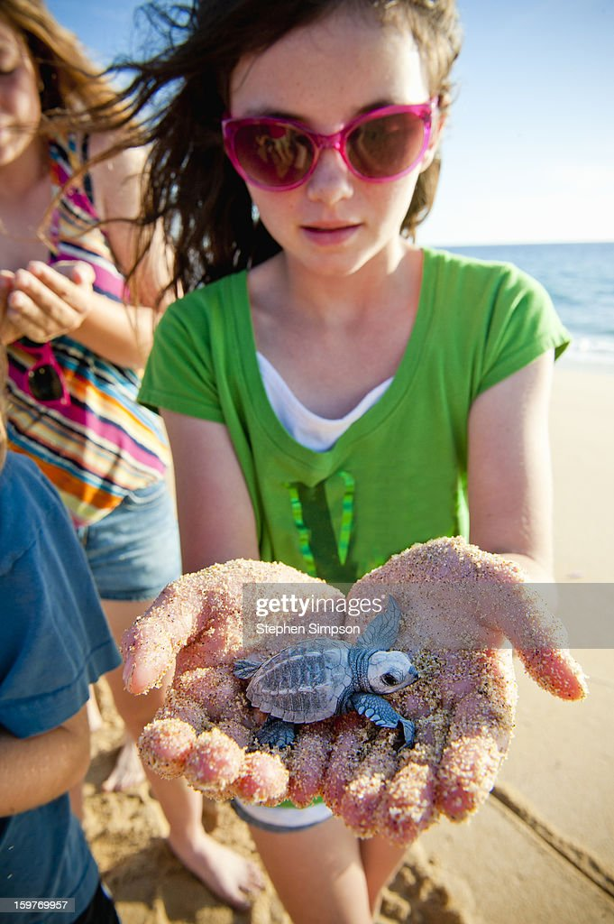 girls about to release Pacific Green Sea Turtles : Stock Photo