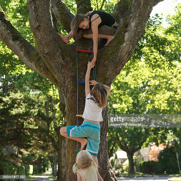 Girls (2-14) climbing tree ladder, rear view