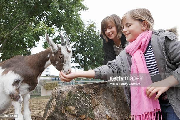 girls feeding baby goat