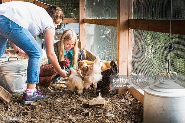 Girls feeding chickens in chicken coop