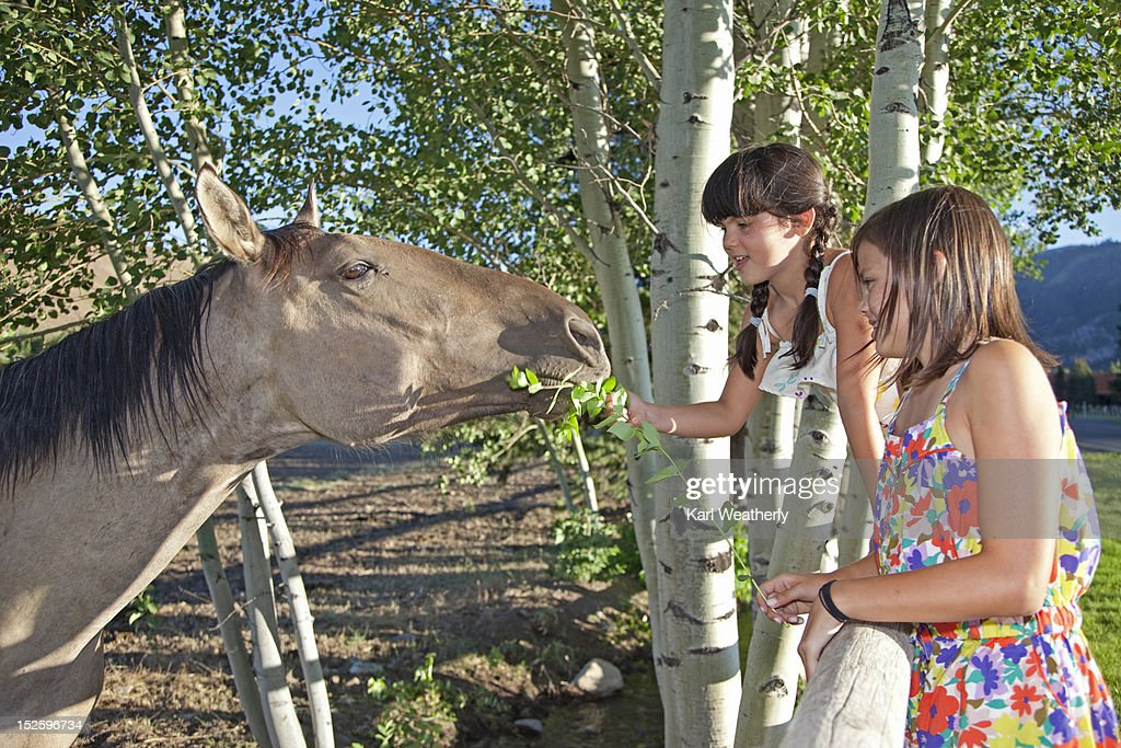 Girls feeding horses : Stock Photo