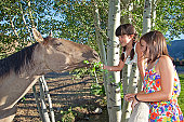 Girls feeding horses