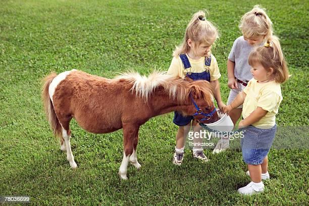 Girls feeding Shetland pony