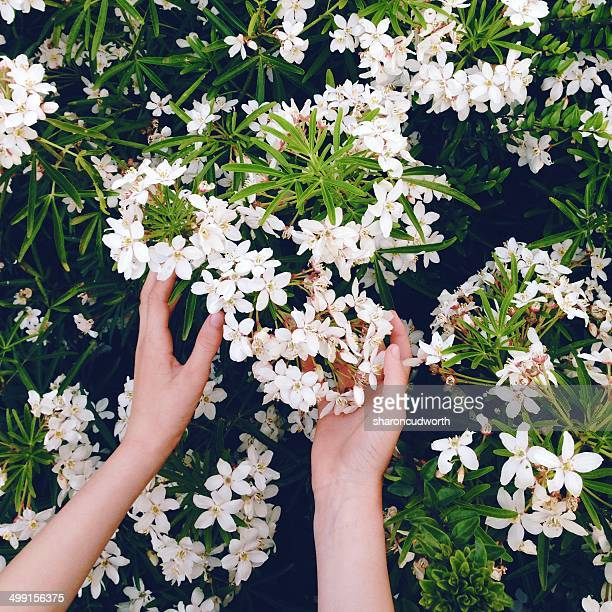 Woman's hand and flower bush