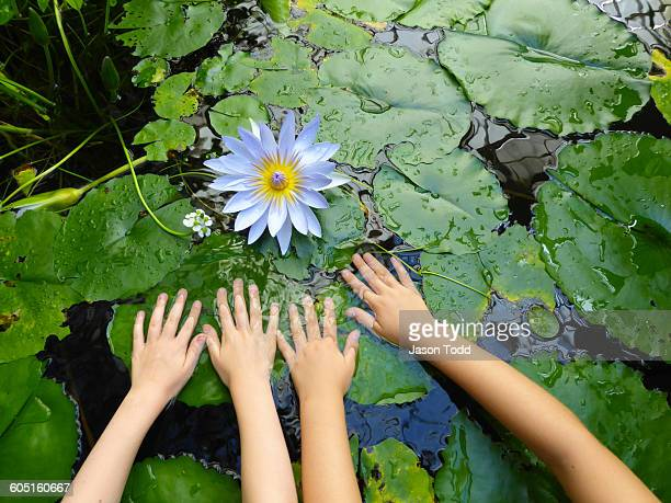 Girls hands on lily pad with white lotus lily