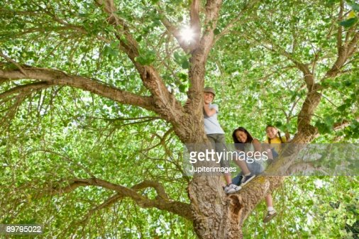 Girls in tree : Foto de stock