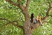 Girls in tree