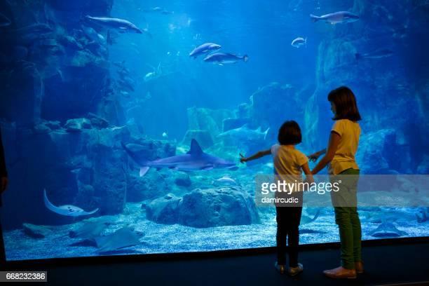 Girls looking at the fish in a big aquarium