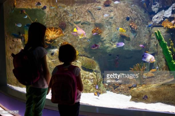 Mädchen auf der Suche auf die Fische in einem großen aquarium